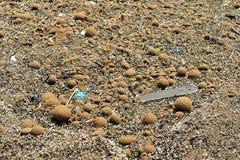 Zeewierballen op strand in Albanië Stock Fotografie