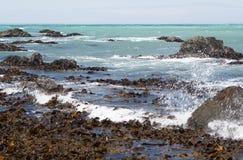 Zeewieren tijdens een grondoverzees Stock Foto