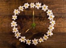 zegarowy kwiatu odosobnienia biel Fotografia Royalty Free