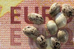 Zehn Eurobanknote und Hanfsamen Stockfoto