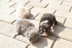 Zehn Tagesalte Babykatzen auf der Pflasterung im Hinterhof lizenzfreies stockfoto