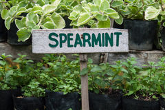Zeichen der grünen Minze stockfotos