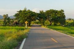 Zeichen der kurvenreichen Straße stockbild