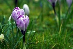 Zeichen des Frühlinges Stockfoto