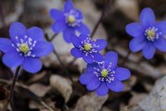 Zeichen des Frühlinges Stockfotos