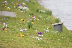 Zeichen des Frühlinges! Lizenzfreies Stockbild