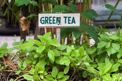 Zeichen des grünen Tees stockbild