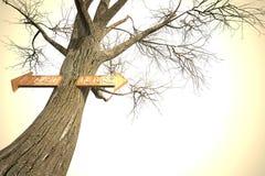 Zeichen des zukünftigen Baums der Umgebungsvergangenheit lizenzfreie abbildung