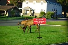 Zeichen, Gefahr nähern sich nicht wild lebenden Tieren Lizenzfreies Stockfoto