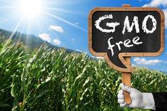 Zeichen von GMO geben auf einem Mais-Feld frei Lizenzfreies Stockfoto