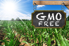Zeichen von GMO geben auf einem Mais-Feld frei Stockbild