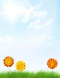 Zeichenfeld gebildet von den Blumen im Gras. Lizenzfreie Stockfotografie