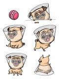 Zeichentrickfilm-Figur Pug-Hundehaltungen Netter Schoßhund in der flachen Art Stellen Sie Hunde ein vektor abbildung