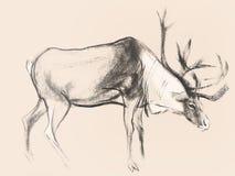 Zeichnen auf Papier von Rotwild auf rosa Hintergrund Stockbilder