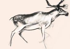 Zeichnen auf Papier von Rotwild auf rosa Hintergrund Lizenzfreie Stockbilder