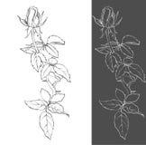 Zeichnen eines Rosebud Stockfotos