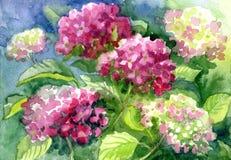Zeichnende blühende Hortensien Papier, Wasserfarbe Stockfotografie