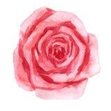 Zeichnende Rosarose des Aquarells Stockfotografie