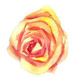 Zeichnende Rosarose des Aquarells Stockbilder