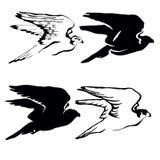 Zeichnung des Falken Stockfoto