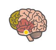Zeichnung des Gehirns Getrennte Nachricht auf weißem Hintergrund stock abbildung