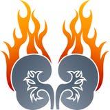 Zeichnung des Nierenflammenlogos Stockfotos