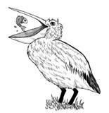 Zeichnung des Pelikans mit Fischen Stockbild