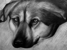 Zeichnung eines Hundes in Schwarzweiss Stockbild