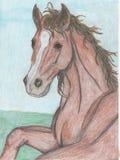 Zeichnung eines Pferds Lizenzfreie Stockfotos