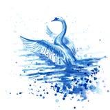 Zeichnung ` Schwan `, Papier, Wasserfarbe Stockfotos