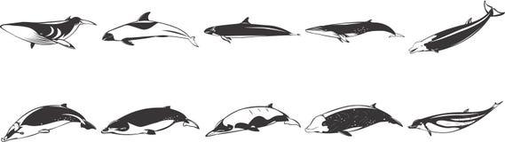 Zeichnungen der Fische u. der Delphine Lizenzfreies Stockfoto