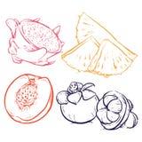 Zeichnungs-Ananasscheiben lokalisiert auf weißem Hintergrund Drache Franc Lizenzfreie Stockfotos