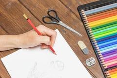 Zeichnungsblumen durch Bleistifte Lizenzfreies Stockbild