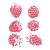 Zeichnungshimbeere lokalisiert auf weißem Hintergrund Frucht Hand gezeichnet Lizenzfreies Stockfoto