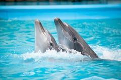 Zeigen Sie im dolphinarium Stockfotos
