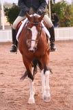 Zeigen Sie Pferd Stockfoto