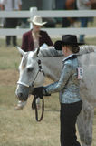 Zeigen Sie Pferd Stockbild
