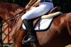 Zeigen Sie Pulloverpferd während des Trainings mit nicht identifiziertem Reiter Stockfotografie