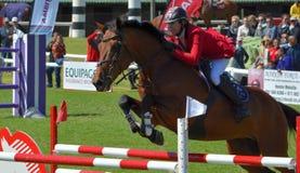 Zeigen Sie springendes Pferd und Mitfahrer Stockbilder