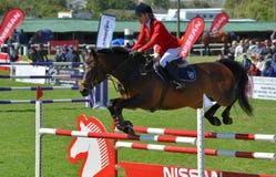 Zeigen Sie springendes Pferd und Mitfahrer Stockfotos