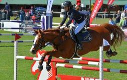Zeigen Sie springendes Pferd und Mitfahrer Stockfoto