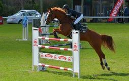 Zeigen Sie springendes Pferd und Mitfahrer Stockfotografie