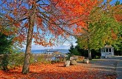 Zeigen Sie Trotz-Park in Tacoma WA mit den Roten und Orangenblättern Lizenzfreies Stockbild