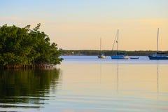 Zeilboten en Mangroven stock fotografie