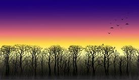Zeile der Bäume auf dem Horizont Sonnenuntergang Stockbilder