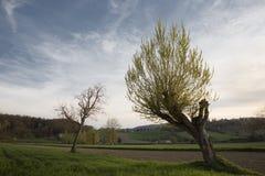 Zeile der blühenden Bäume des Frühjahrs Lizenzfreie Stockfotos