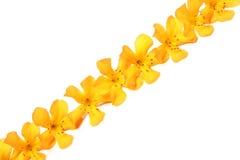 Zeile der gelben Blumen lizenzfreie stockfotos