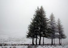 Zeile der Kiefern im Nebel Lizenzfreies Stockfoto