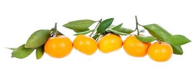 Zeile der Mandarinen mit Blättern Lizenzfreie Stockfotografie