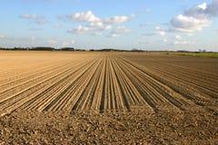 Zeilen auf Bauernhof Stockfotos